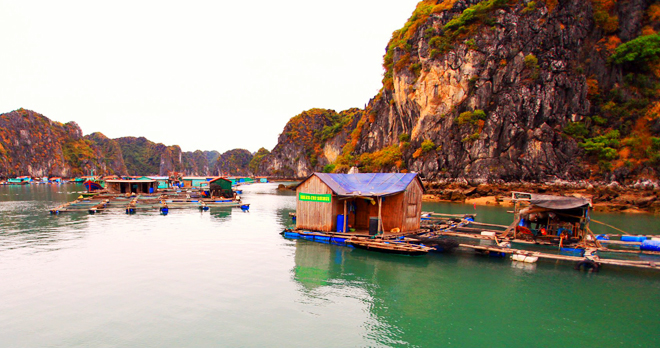 làng chài vịnh Hạ Long