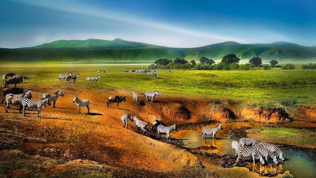 thien-duong-hoang-da-trong-mieng-nui-lua-ngorongoro